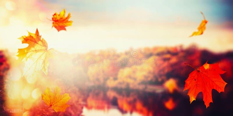 De herfstachtergrond met dalende bladeren bij landschap van stadspark met kleurrijke bomen bij zonsonderganglicht met bokeh stock fotografie