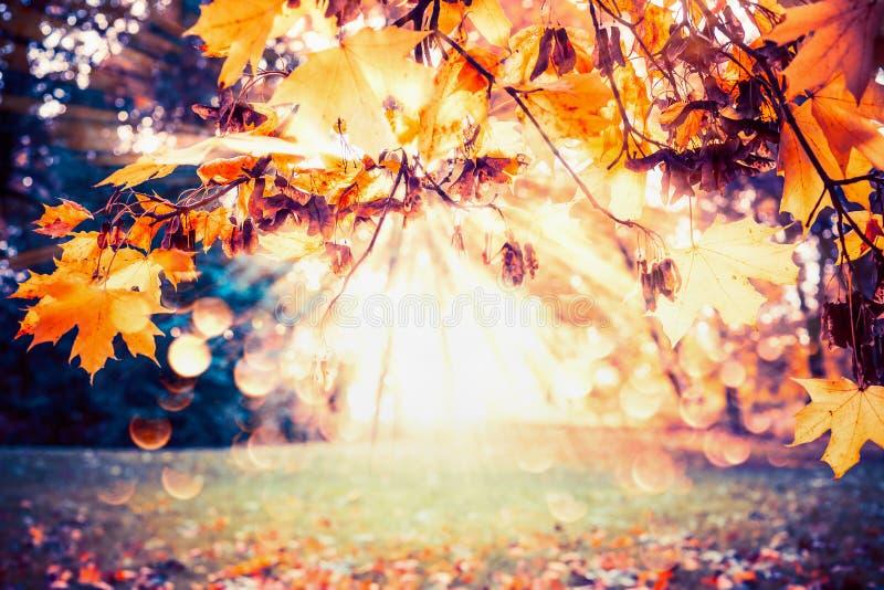 De herfstachtergrond met dalingsgebladerte en zonnestraal bij park of tuin royalty-vrije stock foto's