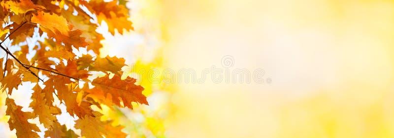 De herfstachtergrond met eiken bladeren Het kleurrijke landschap van het gebladerte herfstpark Malplaatje van de dalings het seiz stock afbeeldingen