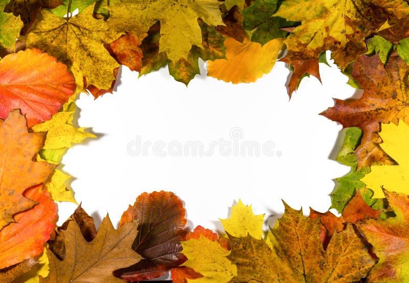 De herfstachtergrond met gekleurde bladeren, kastanjes en pinda's op witte raad royalty-vrije stock fotografie