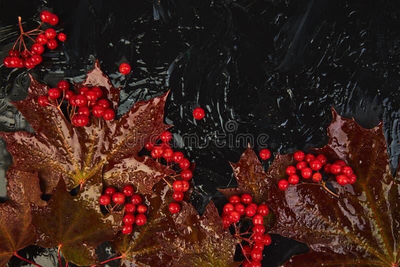 De herfstachtergrond met de rode bladeren van de de herfstesdoorn en viburnumbessen royalty-vrije stock foto's