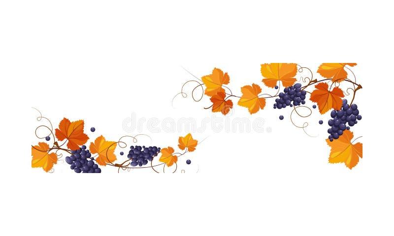 De de herfstachtergrond met ruimte voor tekst, banner met heldere druif verlaat en bundelt van druiven vectorillustratie royalty-vrije illustratie