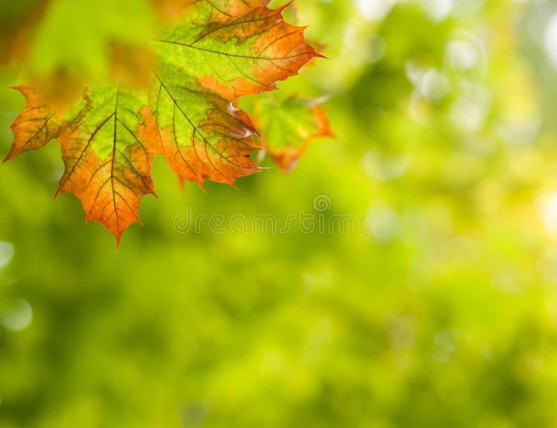 De herfstachtergrond van de daling stock afbeelding