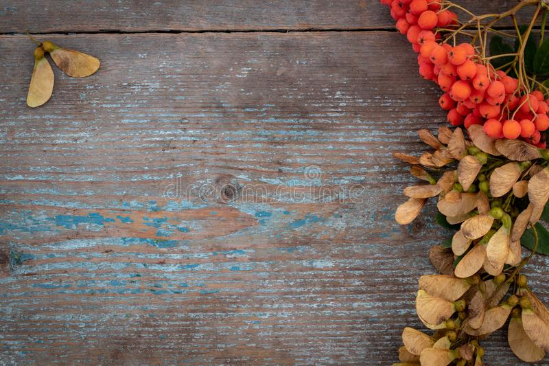 De herfstachtergrond van gevallen bladeren en vruchten met uitstekende pla royalty-vrije stock foto's