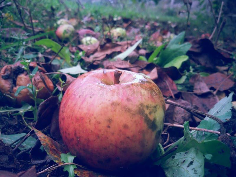 De herfstappel stock afbeelding
