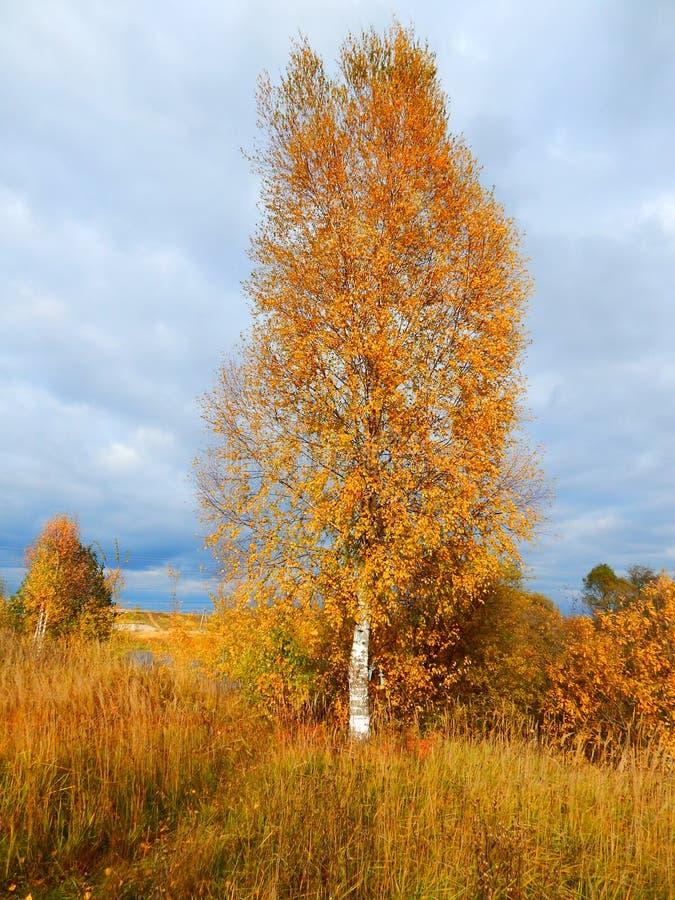 De herfstberk royalty-vrije stock foto