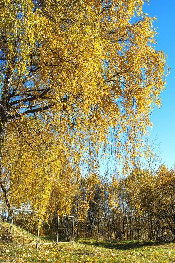 De herfstberk stock foto