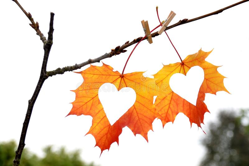 de herfstblad met hart royalty-vrije stock fotografie