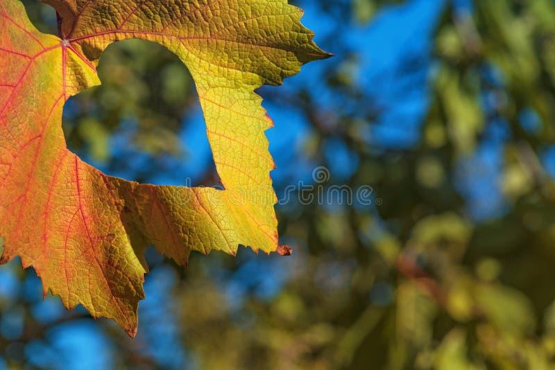 De herfstblad op een achtergrond van bomen en blauwe hemel De aardachtergrond van het de herfstblad Gele bladeren over blauwe hem royalty-vrije stock foto
