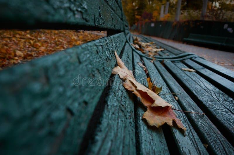 De herfstblad op een bank stock foto's