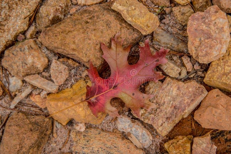 De herfstblad op de rotsen royalty-vrije stock foto