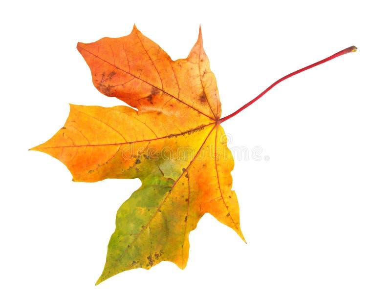 De herfstblad op wit stock afbeelding