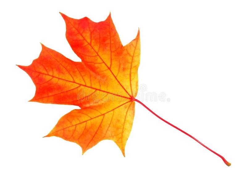 De herfstblad op wit stock foto