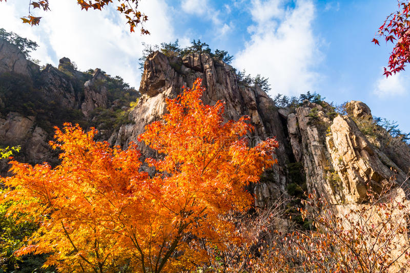 De herfstbladeren in Bei Jiu Shui-sleep, Laoshan-Berg, Qingdao, China royalty-vrije stock afbeelding
