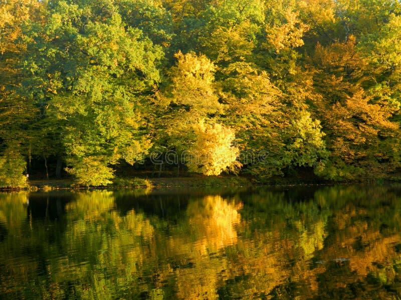 De herfstbladeren die in water weerspiegelen royalty-vrije stock afbeelding