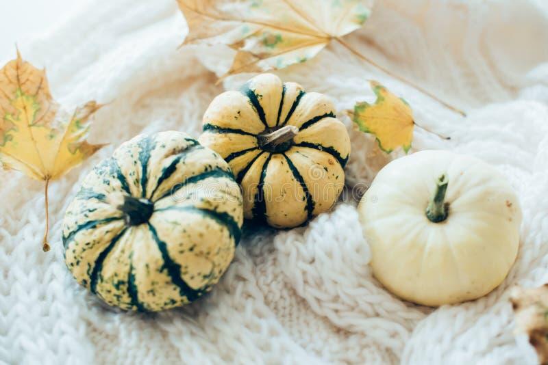 De de herfstbladeren en de kleine decoratieve pompoenen op warme comfortabel breien sw stock afbeelding