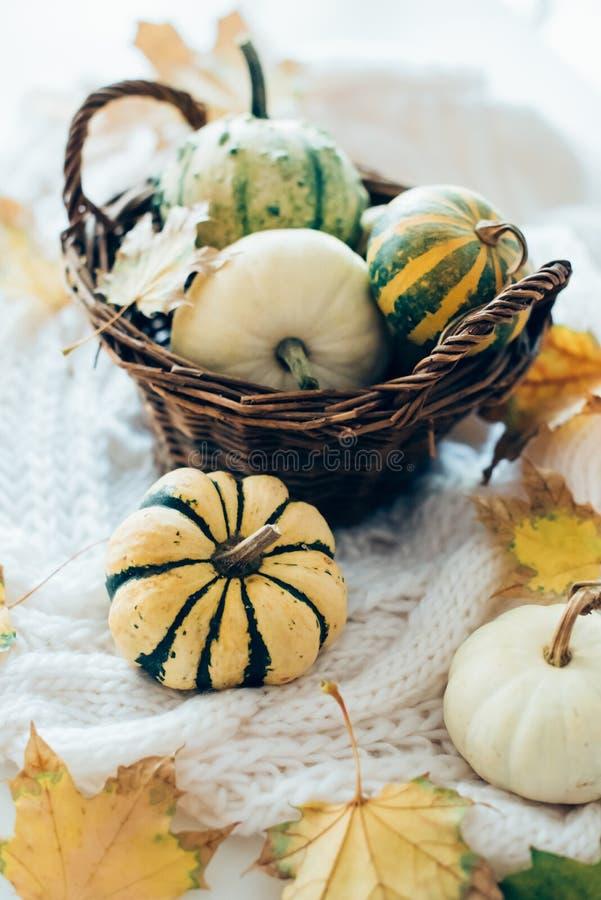 De de herfstbladeren en de kleine decoratieve pompoenen op warme comfortabel breien sw stock fotografie