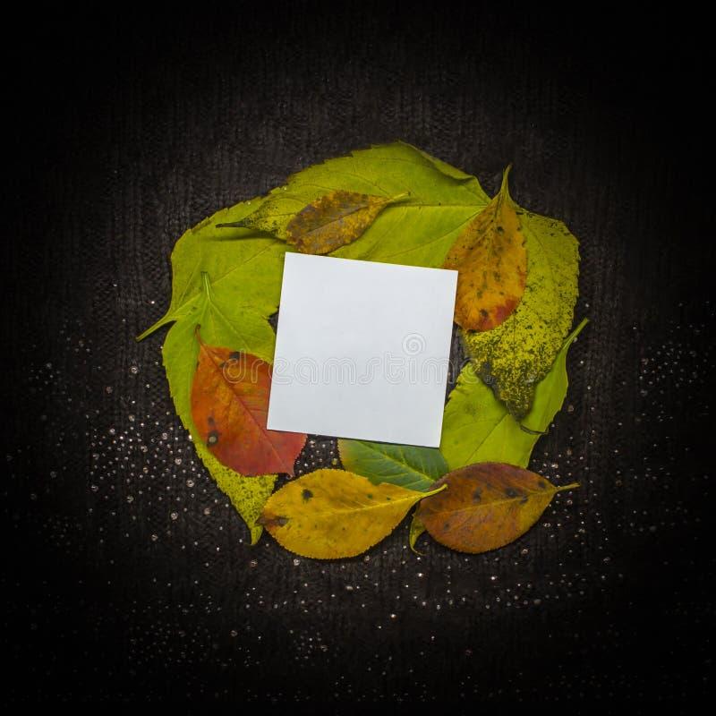 De herfstbladeren geel en groen op zwarte achtergrond royalty-vrije stock foto's