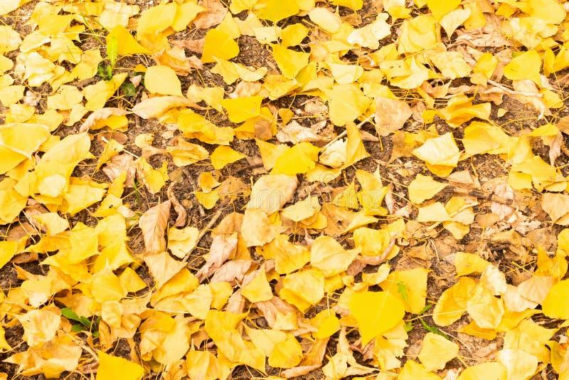 De herfstbladeren in het bos op een zonnige dag stock foto's