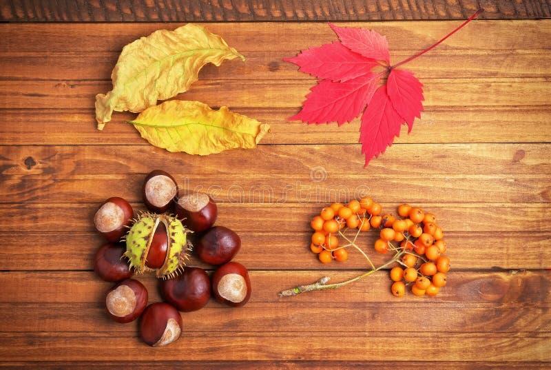 De herfstbladeren, kastanjes en lijsterbes op houten achtergrond stock foto