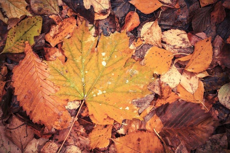 De herfstbladeren leggen op de grond in park, gestemde foto royalty-vrije stock foto's