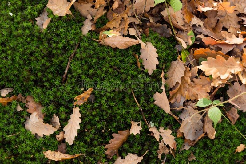 De herfstbladeren meer dan een laag van een mooi groen mos royalty-vrije stock foto's