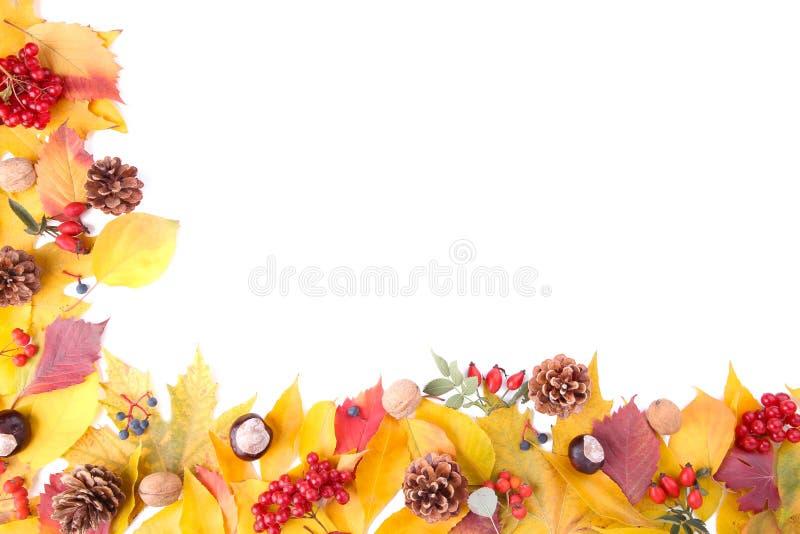De herfstbladeren met bessen op wit worden geïsoleerd dat royalty-vrije stock afbeelding