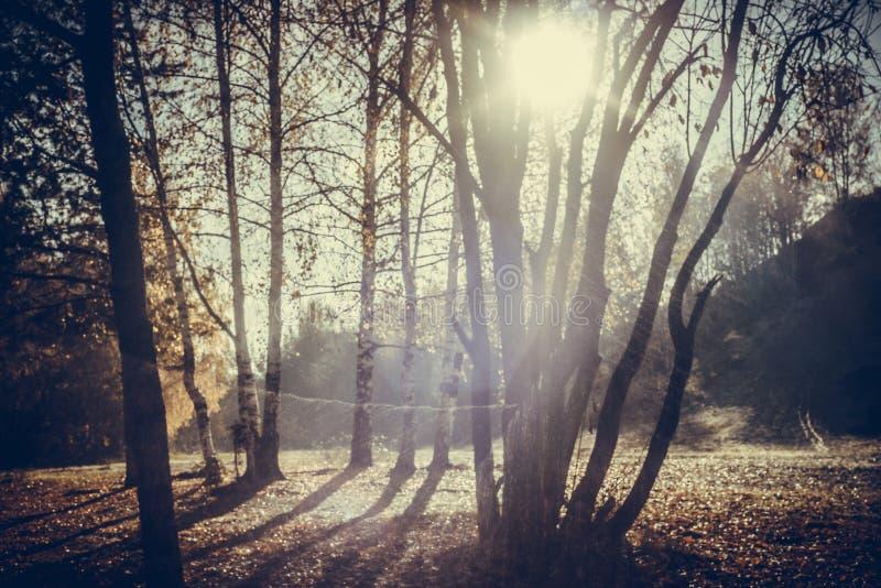 De herfstbladeren met vage bomen Dalings onscherpe achtergrond stock foto's