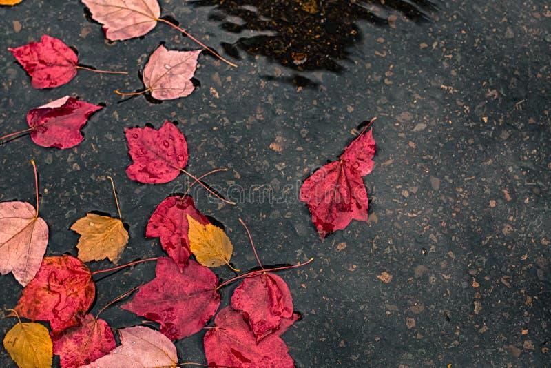 De herfstbladeren onder regen royalty-vrije stock foto's