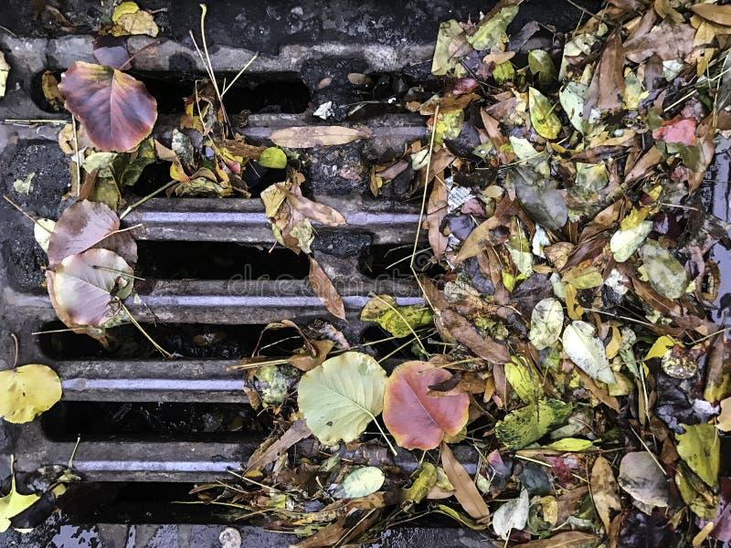 De herfstbladeren op afvoerkanaal royalty-vrije stock afbeelding