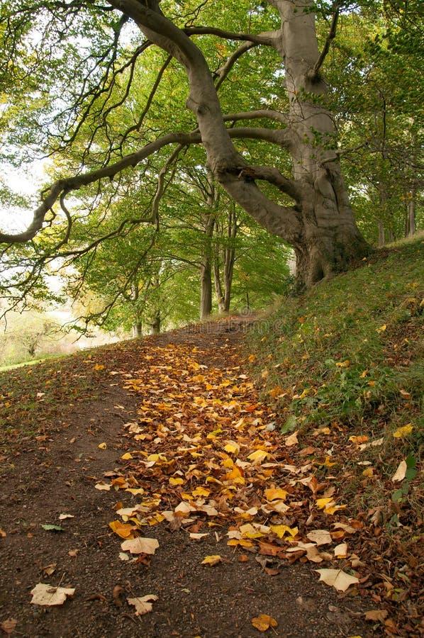 De herfstbladeren op de grond royalty-vrije stock fotografie
