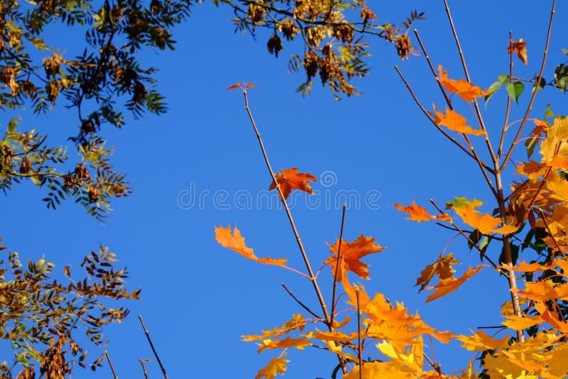De herfstbladeren op een blauwe hemelachtergrond royalty-vrije stock afbeeldingen