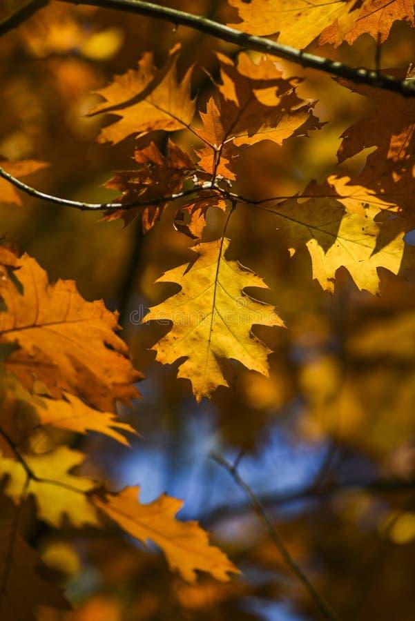 De herfstbladeren op een mooie zonnige de herfstdag royalty-vrije stock fotografie