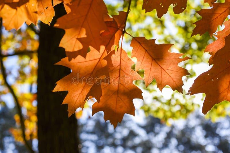 De herfstbladeren op een mooie zonnige de herfstdag royalty-vrije stock foto's