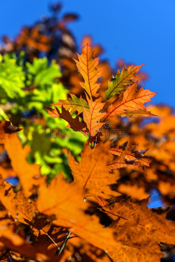 De herfstbladeren op een mooie zonnige de herfstdag royalty-vrije stock afbeeldingen