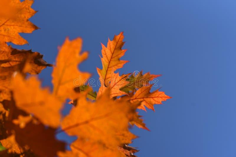 De herfstbladeren op een mooie zonnige de herfstdag stock foto