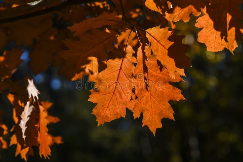 De herfstbladeren op een mooie zonnige de herfstdag royalty-vrije stock foto
