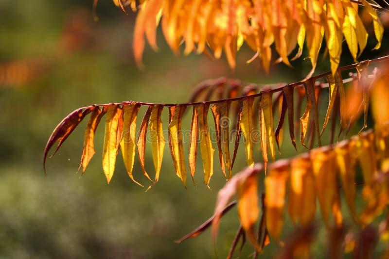 De herfstbladeren op een mooie zonnige de herfstdag stock afbeelding