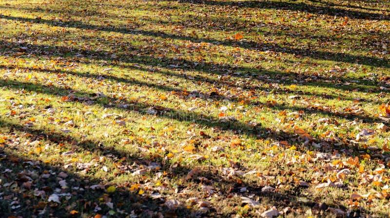 De herfstbladeren op het groene gras royalty-vrije stock fotografie