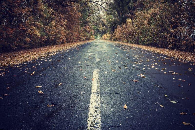 De herfstbladeren op regenachtige weg royalty-vrije stock afbeelding
