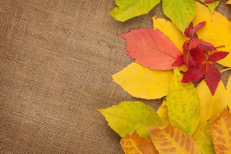 De herfstbladeren over de achtergrond van de jutetextuur stock fotografie