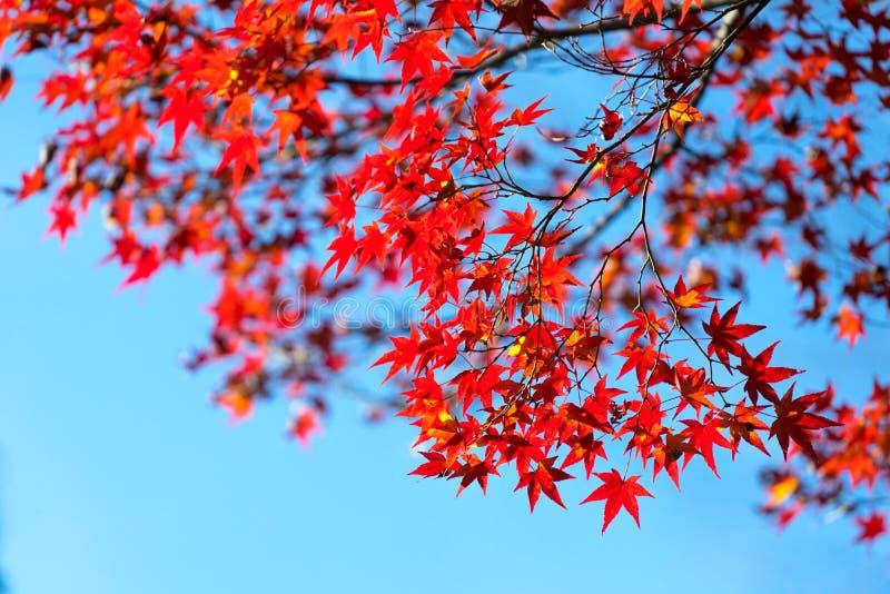 De herfstbladeren rond Arashiyama, Japan stock foto