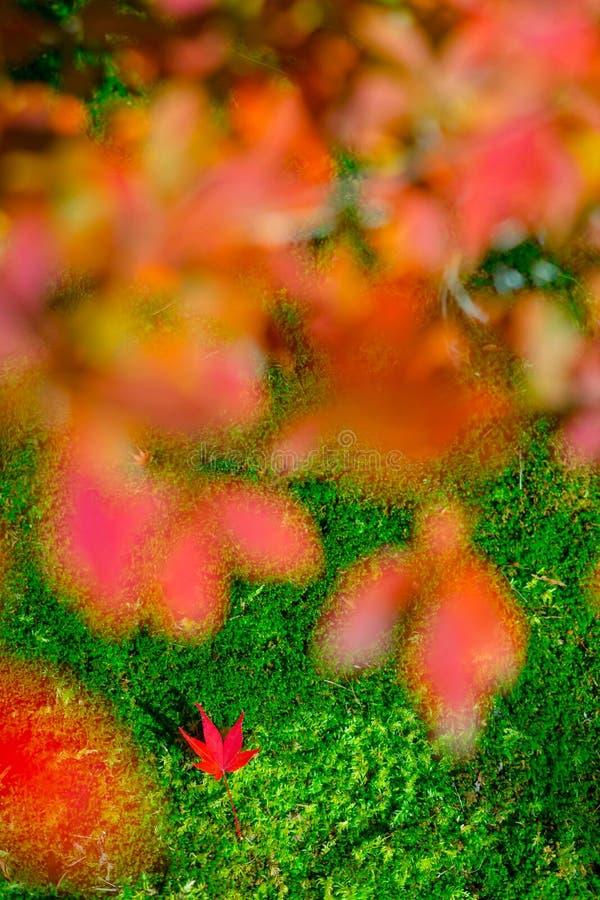 De herfstbladeren rond Arashiyama, Japan stock afbeeldingen