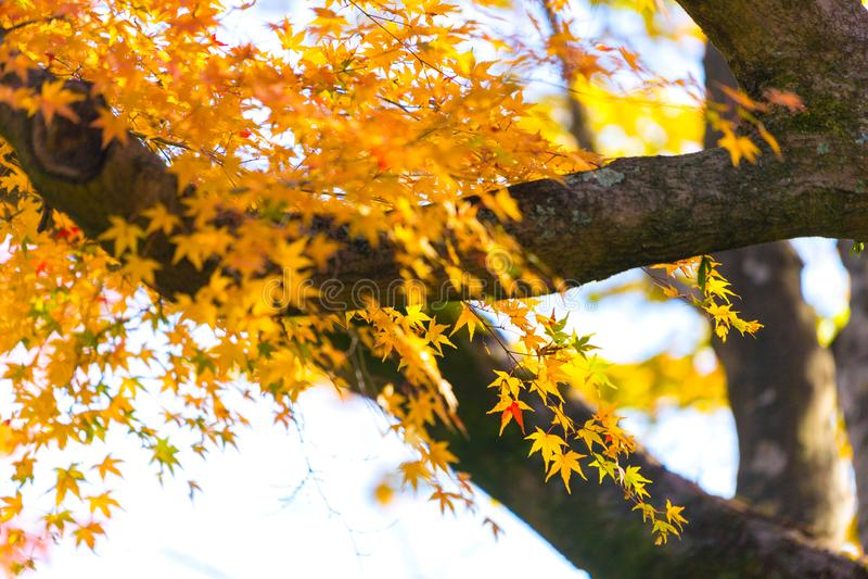 De herfstbladeren rond Arashiyama, Japan royalty-vrije stock foto's