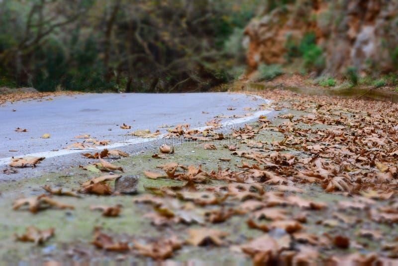 De herfstbladeren in straat royalty-vrije stock foto