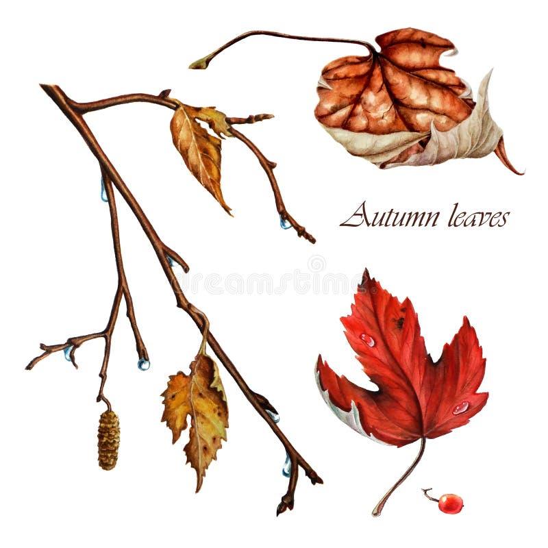De herfstbladeren van berk royalty-vrije stock fotografie