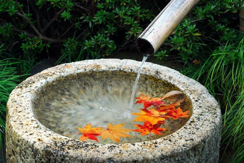 De herfstbladeren van het waterbassin stock foto's