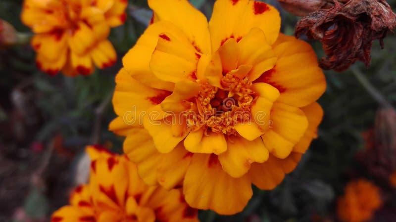 De herfstbloem stock fotografie