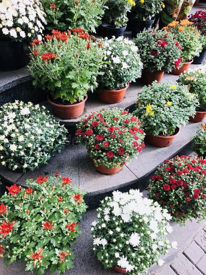 De herfstbloemen in shope royalty-vrije stock afbeelding