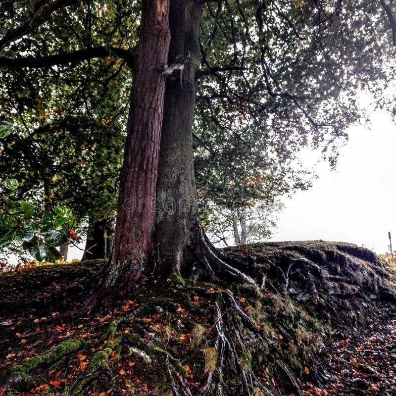 De herfstbomen stock foto's